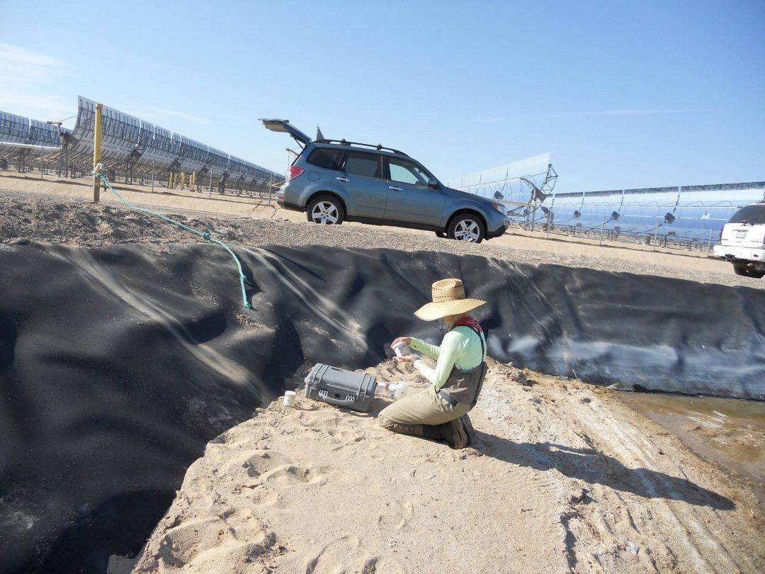 Harper Lake Avian Surveys