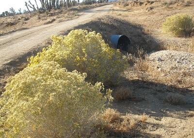 Tehachapi Transmission Line Project Proponents Biological Resource Survey